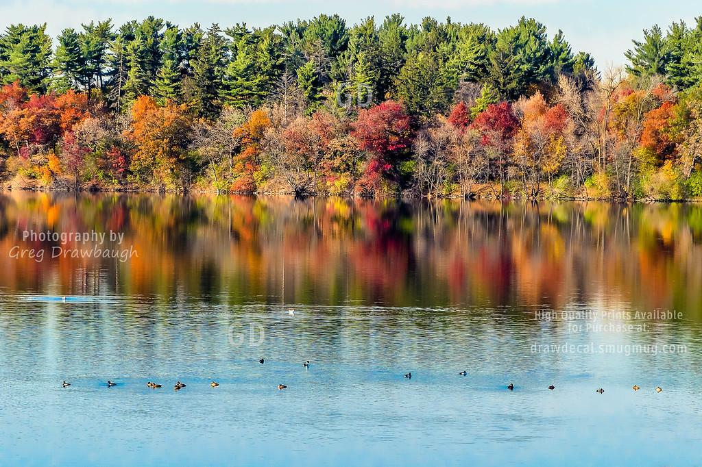 Fall Ducks in Lake Vadnais
