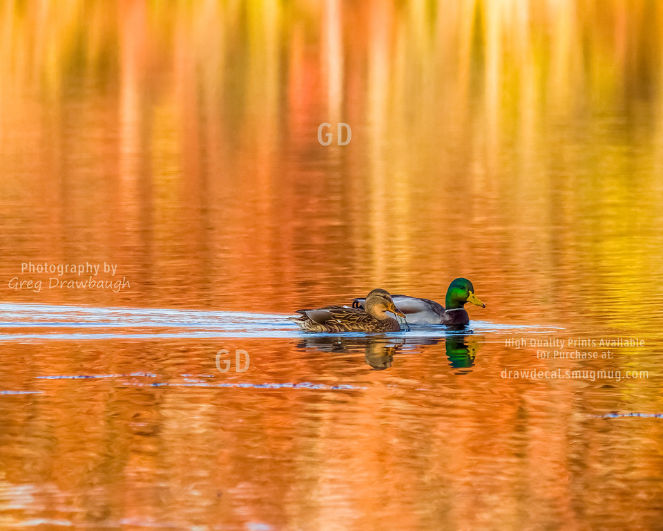 Fall Colors on Sucker Lake