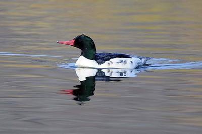 Santee Lakes, Santee, CA 12/26/2009