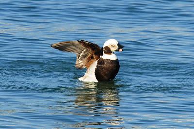 San Diego Bay, Coronado, CA 03/15/2009