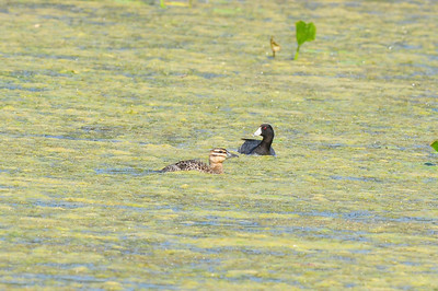 Laguna Anascotia, TX 04/24/2009