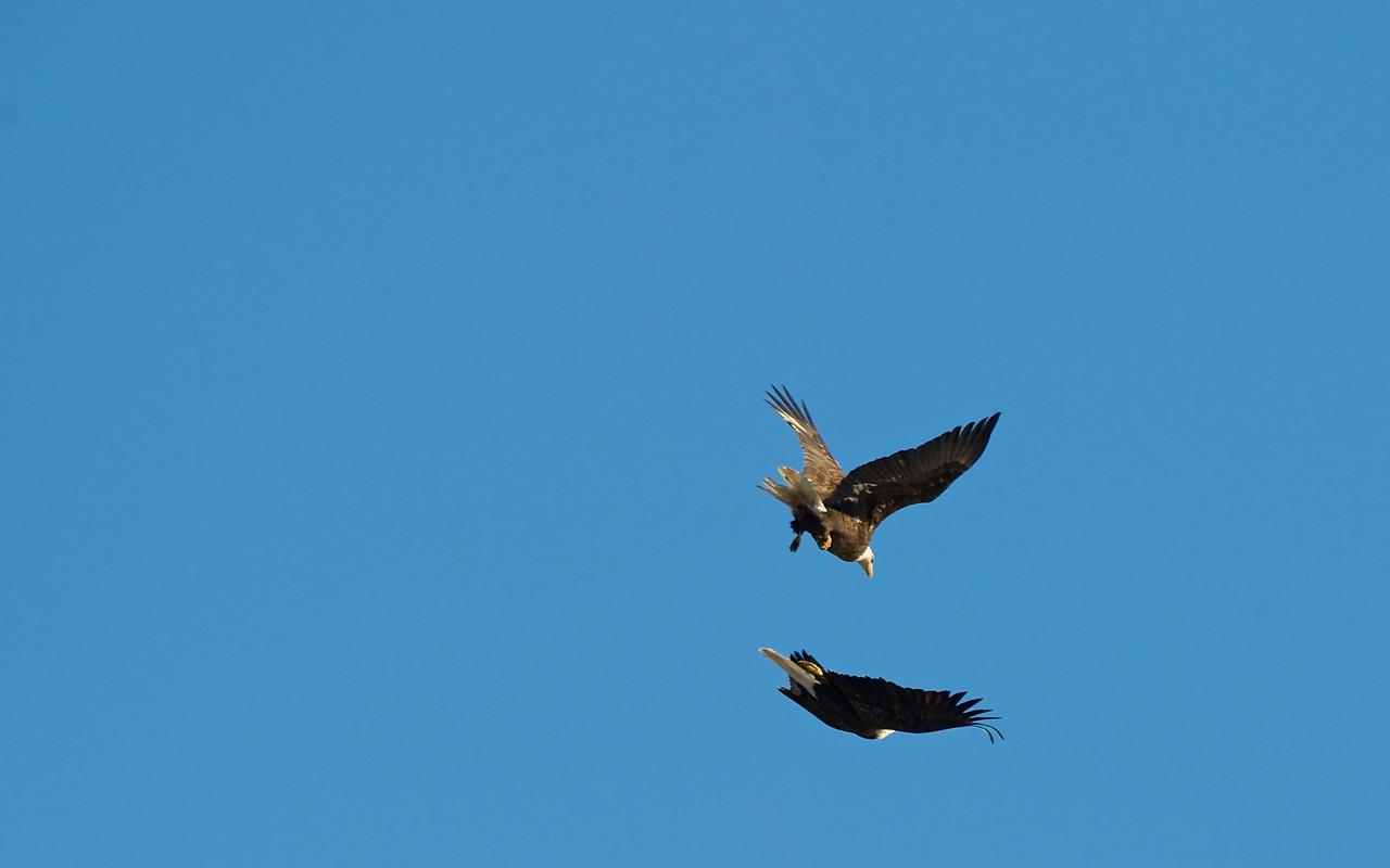 Fox River Eagles