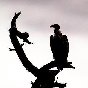 Spooky - Tarangire National Park, Tanzania