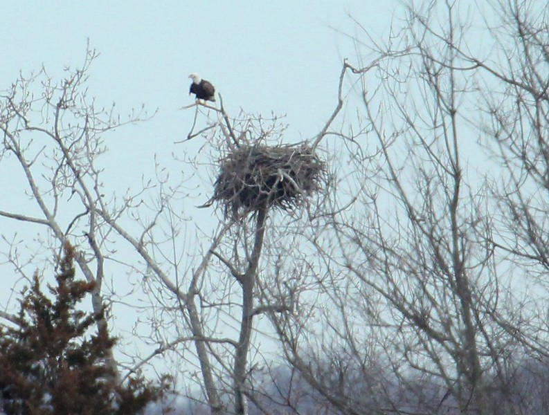 Eagle watch boat cruise 2-20-2016