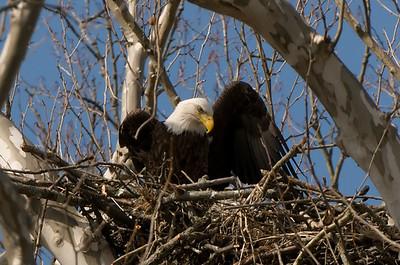 Eagles Nest 2