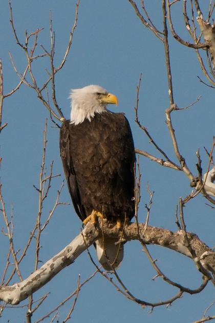 Eagles Nest 1