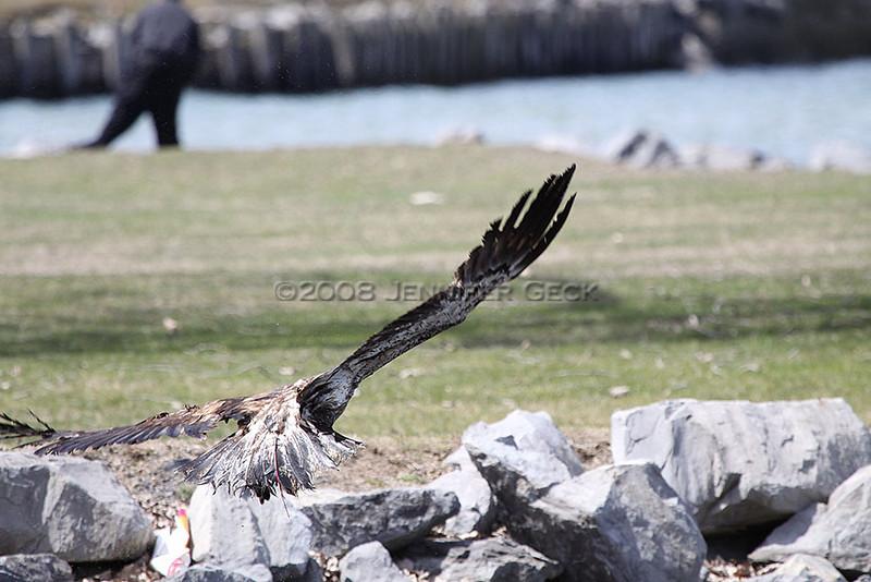 IMG_8006<br /> <br /> ...he flies off.