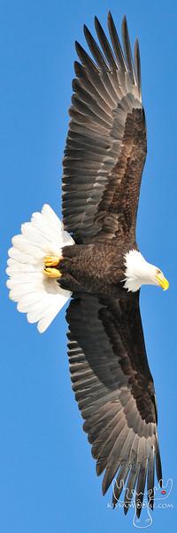 24x72 eagle boat show.jpg