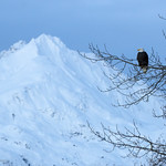 Eagle...