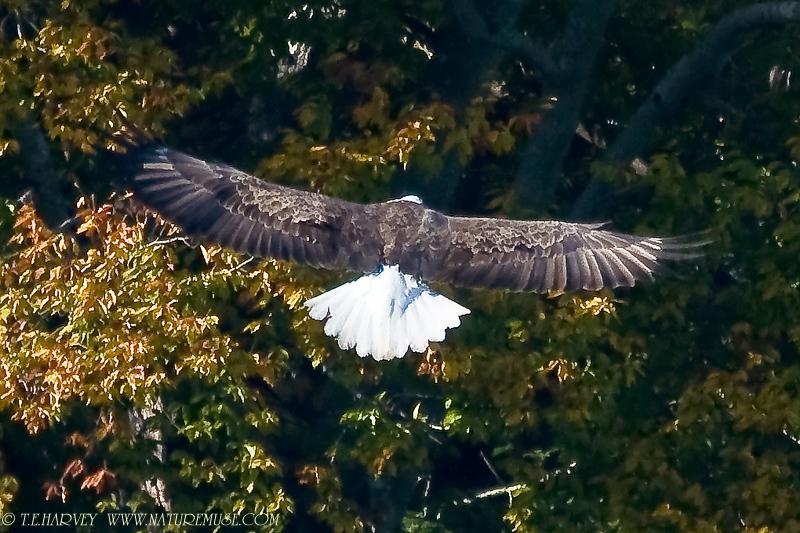 Eagle--Clifton, VA