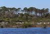 Great Egret (b0547)