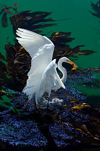 Egret on green and blue