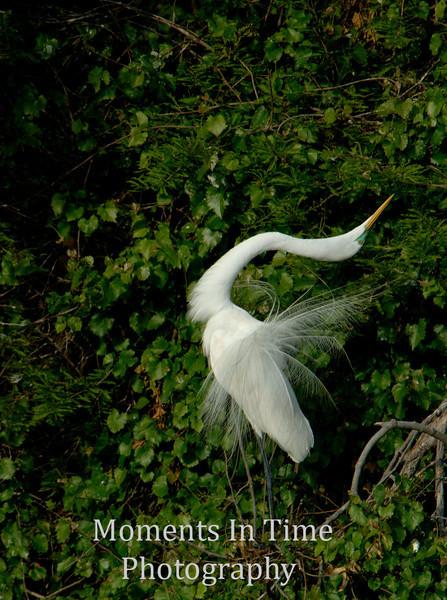Egret stretch 3