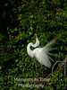 Egret stretch 1
