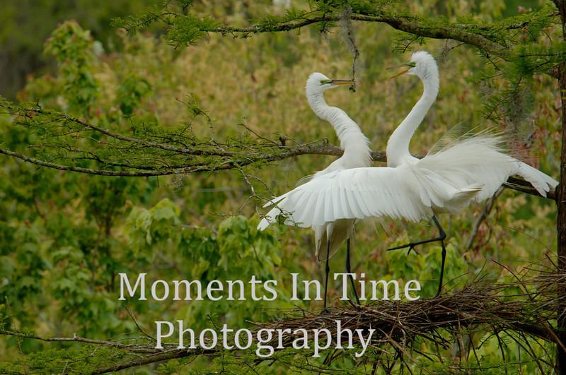 Egret discussion