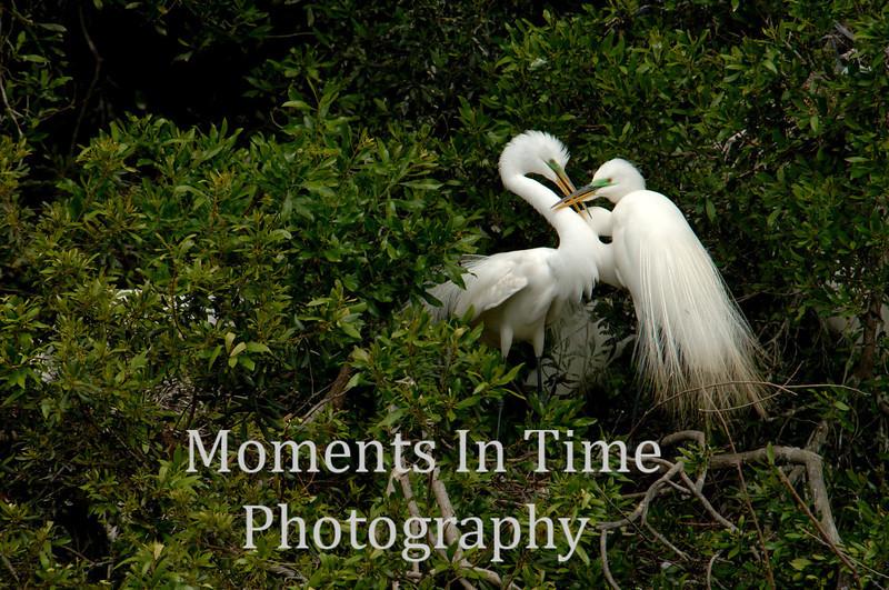 Intimate egrets
