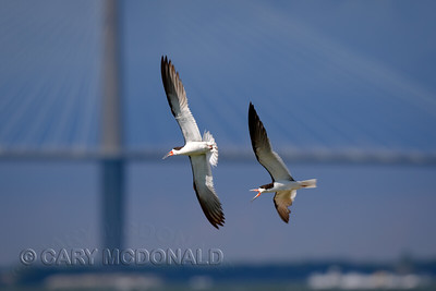 Charleston Harbor With Eric Horan