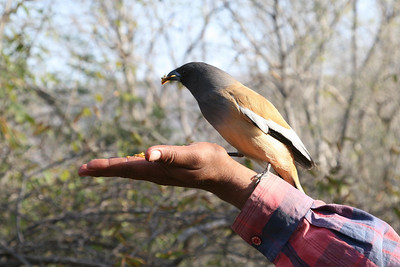 Exotics, Domesticated and Zoo Birds