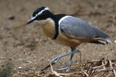 Zoo Shore Birds