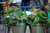Rainbow lorikeet feeding frenzy