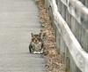 Cat on Bike Path