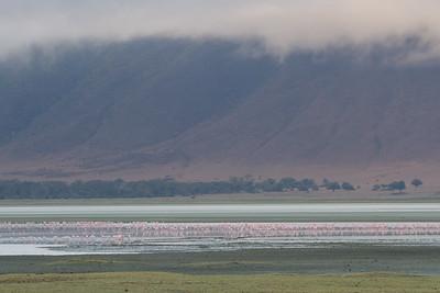 Lesser Flamingoes on  Soda Lake - Ngorongoro Crater, Tanzania