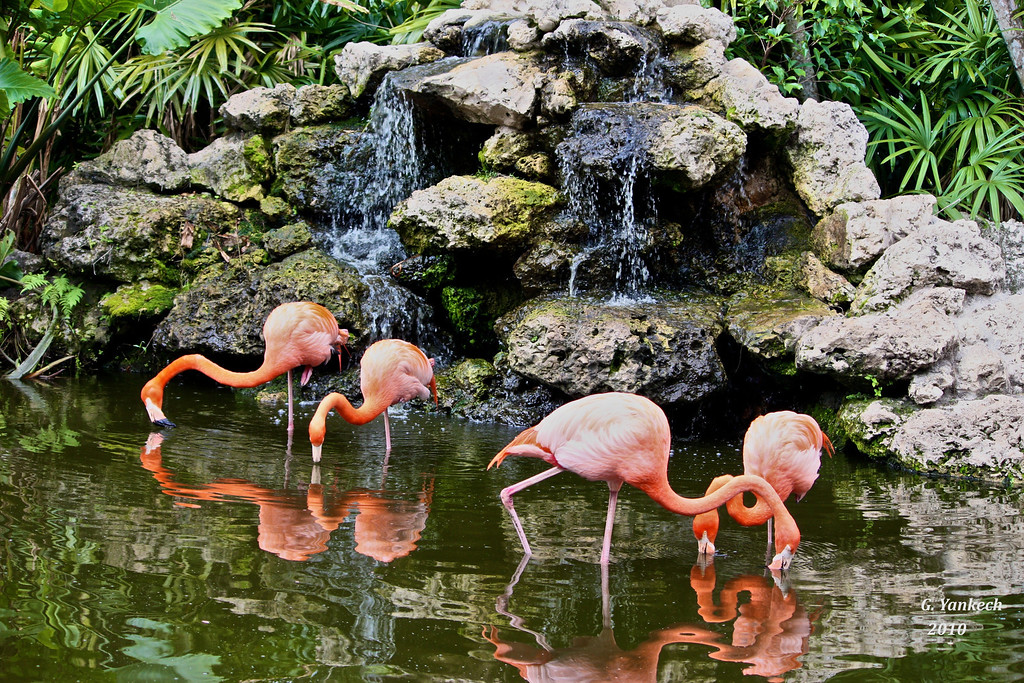 Flamingo Gardens & Everglades Wildlife Sanctuary, Florida, US