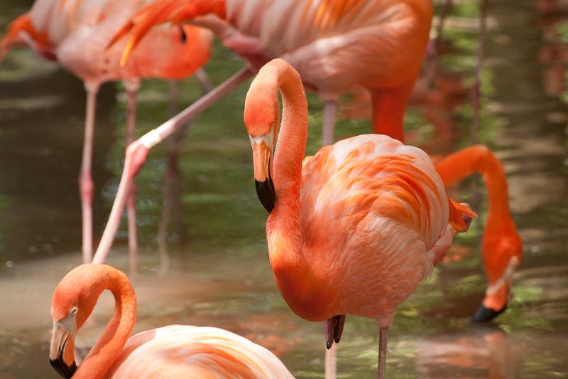 Flamingo SS4405