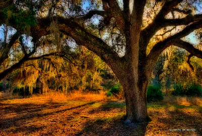 This image is an HDR (high dynamic range) image made up of 5 images of the same scene but shot at different exposures from -2 stops underexposed to +2 stops overexposed, then combined with special software. I added a photoshop filter to this one also. Shots made at Moss Park, Kissimmee Florida, 1-26-2009