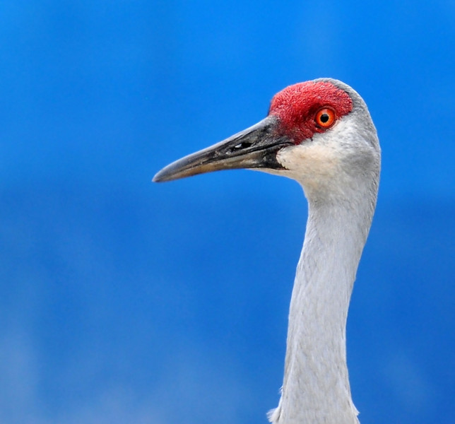Orlando wetlands, against a plastic tank