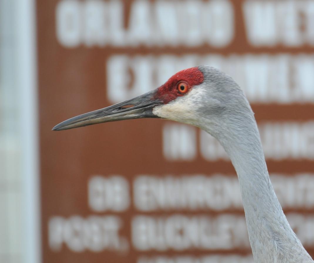 Orlando wetlands, near the parking