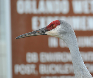 Orlando wetlands, near the parking