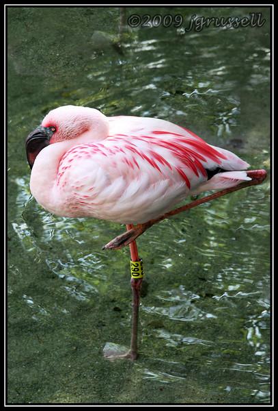 Flamingo - Florida