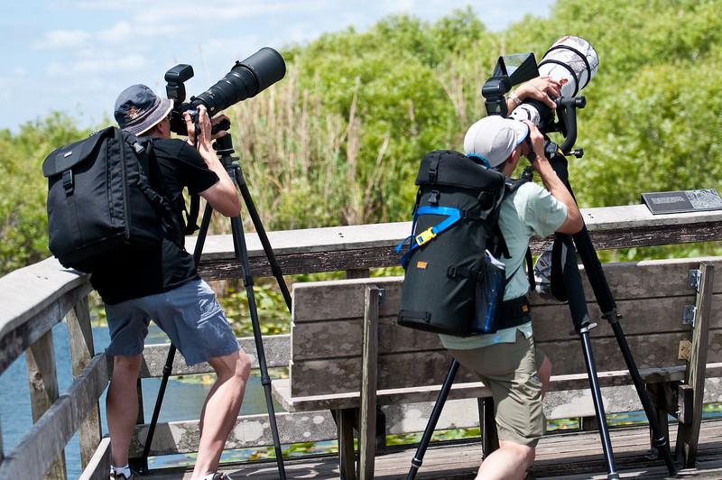 Boardwalk, Anhinga Trail Everglades