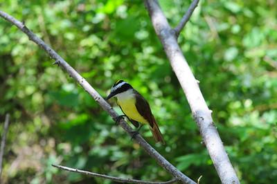 Frontera Audubon Sanctuary, Weslasco, TX 04/24/2009