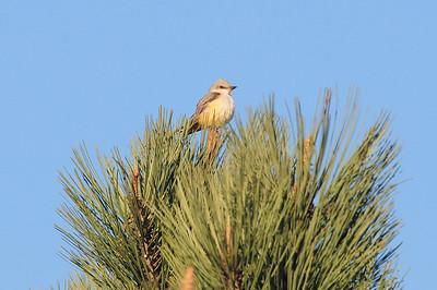 11/24/2009 Near Sea World/Mission Bay, San Diego, CA