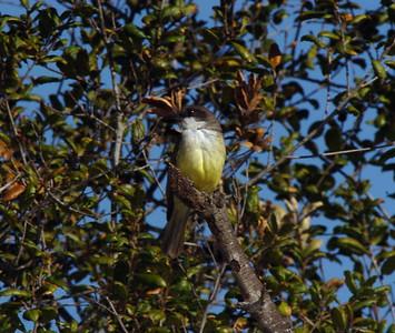 Lake Hodges, Del Dios, San Diego County, CA 11/28/05