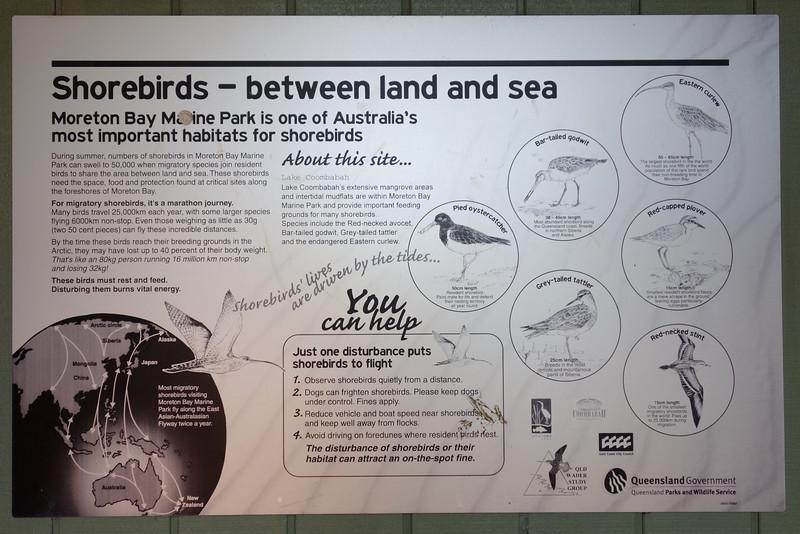 Shorebirds-between land and sea