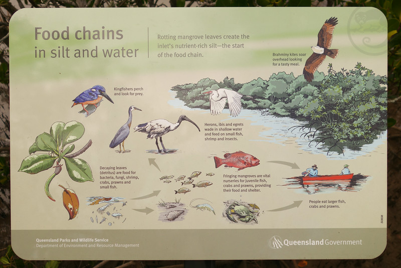 Mangroves. Food chains in silt and water