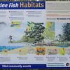 Marine Fish Habitats