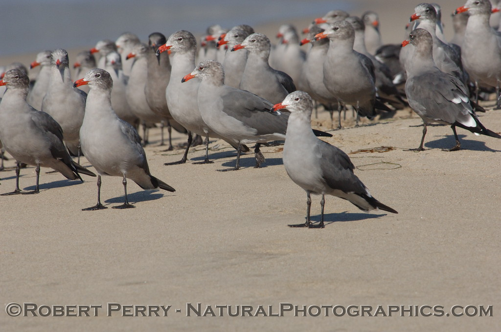 A flock of young adults sunning on the sandy beach.