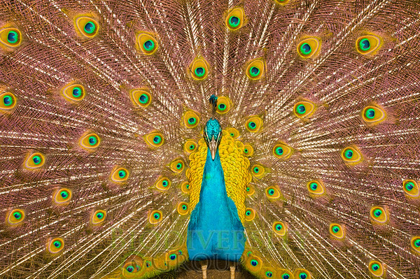 Biodiversity Group, PICT1508