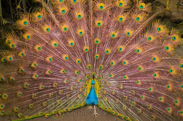 Biodiversity Group, PICT1513