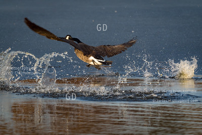 Honker Heavy Cleared for Take OFF