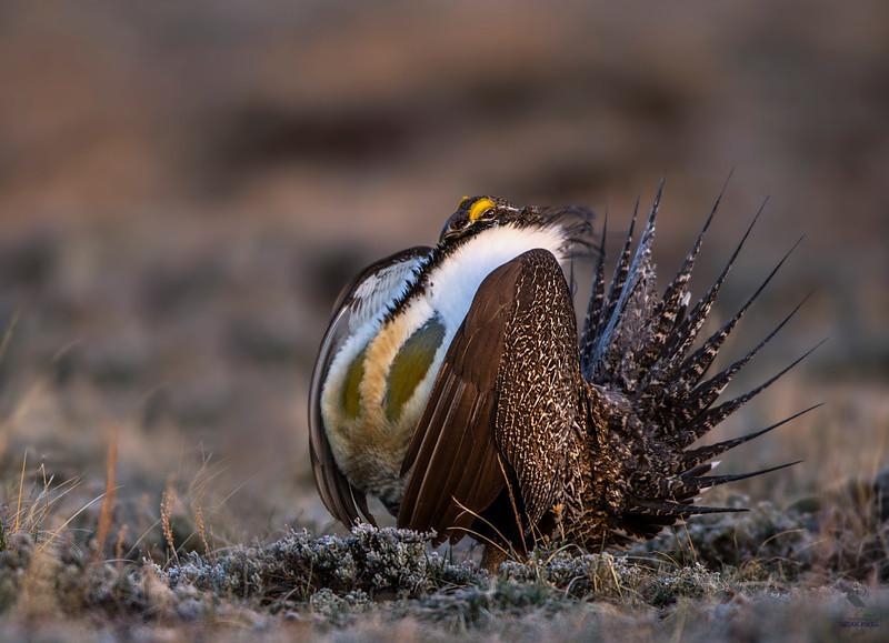 General Bird Species