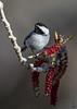 Black-capped Chickadee / Poecile atricapillus