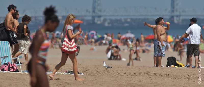 30 July: Gray-hooded Gull surveying the beach scene at Coney Island, Brooklyn