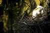 20150531- Bird Magnolia Plantation Swamp-509