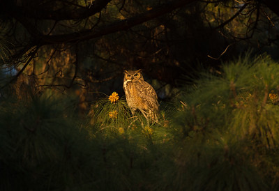 Dad guarding the nest at sunset.