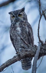 Owlet, September 18, 2015.